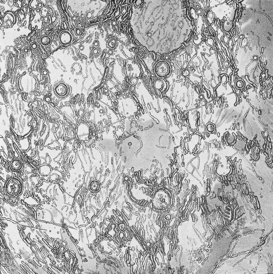Charte der Gebirge des Mondes - Julius Schmidt - Sektion1